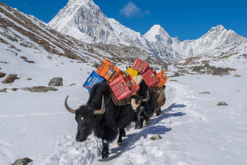 What permits do I need to trek to Everest Base Camp?